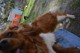banksia-park-puppies-jose-40-of-40