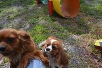 banksia-park-puppies-jose-8-of-40