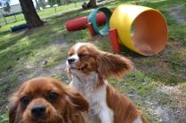 banksia-park-puppies-jose-9-of-40