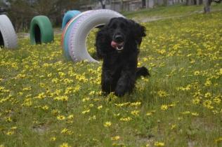 banksia-park-puppies-josefa-10-of-23