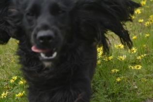 banksia-park-puppies-josefa-11-of-23