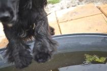 banksia-park-puppies-josefa-15-of-23