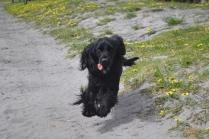 banksia-park-puppies-josefa-16-of-23
