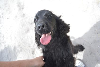 banksia-park-puppies-josefa-20-of-23