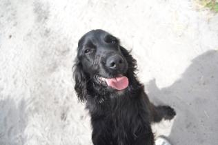banksia-park-puppies-josefa-21-of-23
