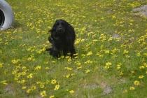 banksia-park-puppies-josefa-4-of-23