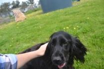 banksia-park-puppies-josefa-5-of-23