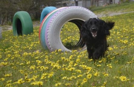 banksia-park-puppies-josefa-9-of-23