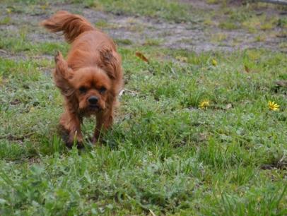 banksia-park-puppies-juhu-1-of-12