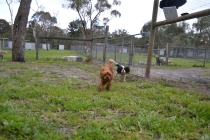 banksia-park-puppies-juhu-10-of-12