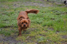 banksia-park-puppies-juhu-2-of-12