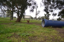 banksia-park-puppies-juhu-4-of-12