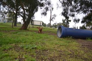 banksia-park-puppies-juhu-5-of-12