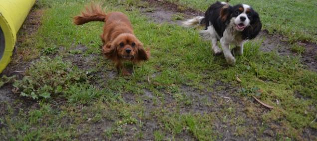banksia-park-puppies-juhu-7-of-12