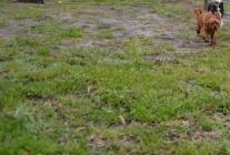 banksia-park-puppies-juhu-9-of-12