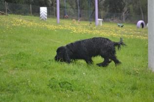 banksia-park-puppies-julia-11-of-14