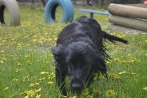 banksia-park-puppies-julia-14-of-14