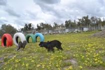 banksia-park-puppies-julia-4-of-14