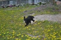 banksia-park-puppies-julia-8-of-14