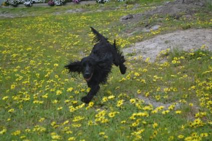 banksia-park-puppies-julia-9-of-14