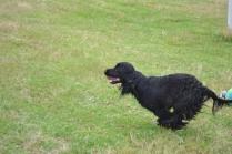 banksia-park-puppies-julia-josepha-16-of-39