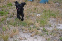 banksia-park-puppies-julia-josepha-17-of-39