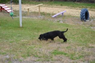 banksia-park-puppies-julia-josepha-23-of-39