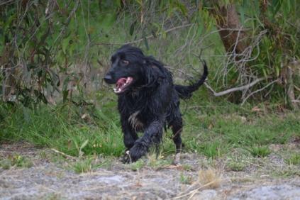 banksia-park-puppies-julia-josepha-24-of-39