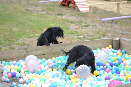 banksia-park-puppies-julia-josepha-7-of-39
