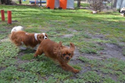 banksia-park-puppies-julsi-1-of-35