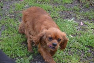 banksia-park-puppies-julsi-11-of-35