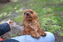 banksia-park-puppies-julsi-13-of-35