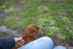 banksia-park-puppies-julsi-15-of-35