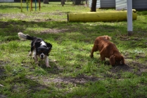 banksia-park-puppies-julsi-18-of-35