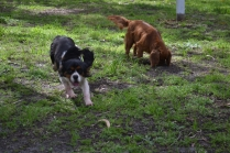 banksia-park-puppies-julsi-19-of-35