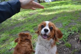 banksia-park-puppies-julsi-21-of-35