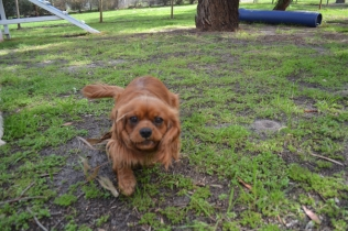 banksia-park-puppies-julsi-22-of-35