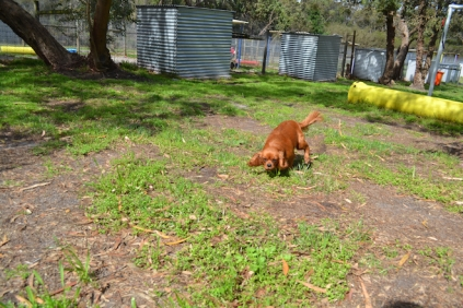 banksia-park-puppies-julsi-23-of-35