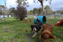 banksia-park-puppies-julsi-27-of-35