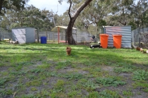 banksia-park-puppies-julsi-28-of-35