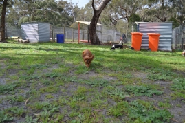 banksia-park-puppies-julsi-29-of-35