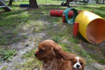 banksia-park-puppies-julsi-3-of-35
