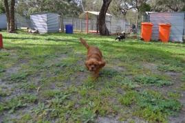 banksia-park-puppies-julsi-30-of-35