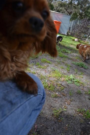 banksia-park-puppies-julsi-32-of-35