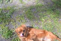 banksia-park-puppies-julsi-34-of-35
