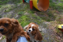 banksia-park-puppies-julsi-4-of-35