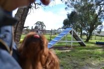 banksia-park-puppies-julsi-6-of-35