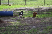banksia-park-puppies-julsi-8-of-35