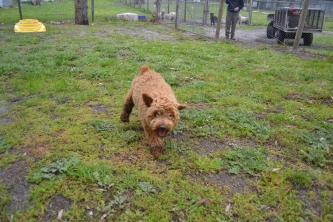 banksia-park-puppies-kojak-17-of-18