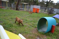 banksia-park-puppies-koko-12-of-29